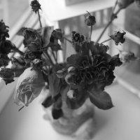 Цветы :: Анастасия Кулагина