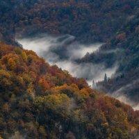 Осенний лес. :: Фёдор. Лашков