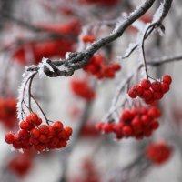 Рука, рождающая красоту.... :: Ната Волга