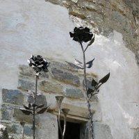 роза на камне :: ruslan romaniuk