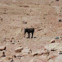 Осел,одинокий в пустыне :: Николай Танаев