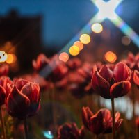 майский вечер :: K K
