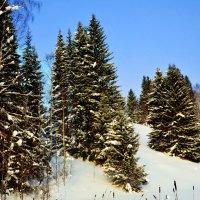 Зима в лесу :: Татьяна Захарова