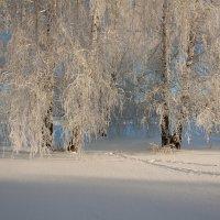 Зимний наряд :: Светлана Медведева