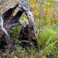 когда-то в это дерево попала молния... :: Александр Прокудин