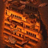 Закат в городских джунглях :: Юля Колосова