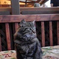 Коте-2. :: Руслан Грицунь