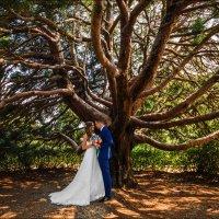 Истинная Любовь – как Дерево. Она вырастает сама собой и пускает корни глубоко в Наше Сердце :) :: Алексей Латыш