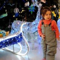 Чудеса под Новый год  :-) :: bemam *