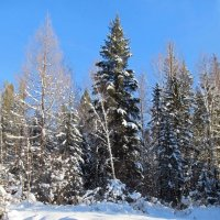 Снежный день. :: Оксана Н
