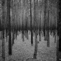 В лесу ... :: Дмитрий Призрак