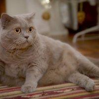 Кустодиевкая кошка :: Elena Kuznetsova