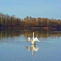 В декабре на озере... :: Galina Dzubina