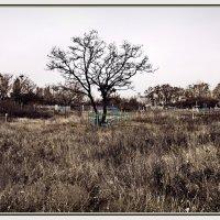 Старое кладбище. Осень... :: Александр
