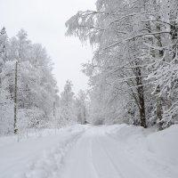 Зимний лес :: Татьяна Крэчун
