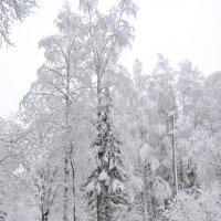 Зимний лес 2 :: Татьяна Крэчун