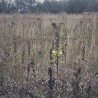 В поле :: Алёна Бадьина