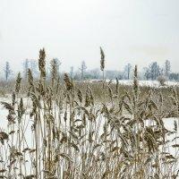 Зимние зарисовки 15 :: Алексей Масалов