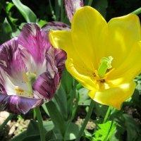 Фиолетовый и жёлтый :: Дмитрий Никитин