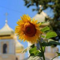 Золотые купола :: Владимир Ларин