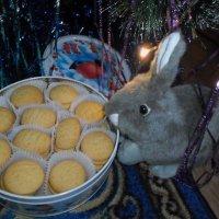 Заяц и печенье :: BoxerMak Mak