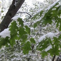 9 октября 2015 года. Первый день зимы :: Дмитрий Никитин