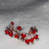 Не меркнет красота и на морозе... :: Tatiana Markova