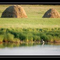 На озере :: Александр Куксин