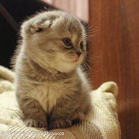 Скромная улыбка котёнка на фотосессии :: Юрий Пузанов