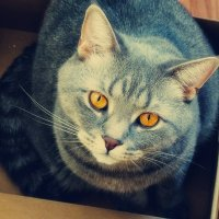 кот в коробке :: лиана алексеева