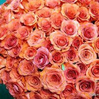 розы алые :: Олег Лукьянов