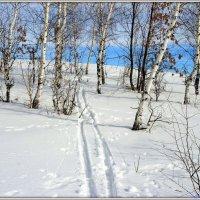 Яркий зимний день :: Андрей Заломленков