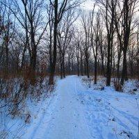 Зимние пейзажи ! :: Татьяна ❧