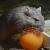 Тоже мне...нашли цирковую мышь.......... :: Татьяна Кретова