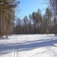 Побродить по лесу,одно удовольствие :: Лидия (naum.lidiya)
