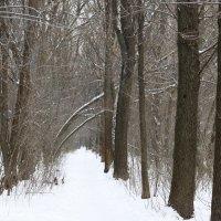 Зима :: Дмитрий Максимовский