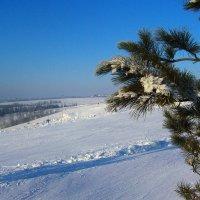 Мороз и солнце, день чудесный :: Grey Bishop