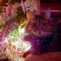 Новогодний котик :: Лиза Ворончихина