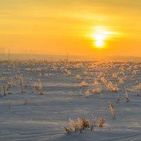 Морозное утро :: Андрей Васильев
