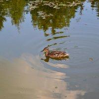 На пруду... :: Александр Филатов