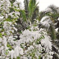 Снег в Сочи... :: СветЛана D