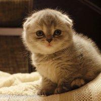 Портрет котенка :: Юрий Пузанов