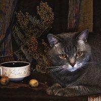 натюрморт с котом :: лиана алексеева