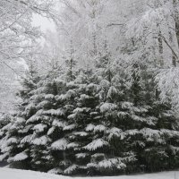 Прошлогодняя зима... :: Светлана