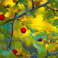 осень золотая :: Екатерина