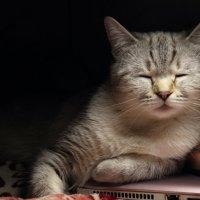 Устала позировать, уснула) :: Ангелина Божинова