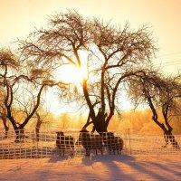 Наконец началась зима :: Laimis S