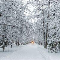 После снегопада :: Любовь Потеряхина