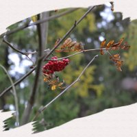 Рисует осень... :: Александр Филатов