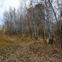 Осень... :: Александр Филатов
